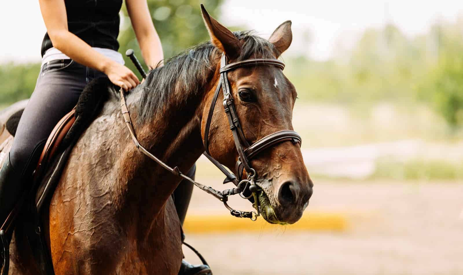 These are the biggest mistakes people make when buying their first horse. Knowing them can help you avoid regrets later. Take a look!