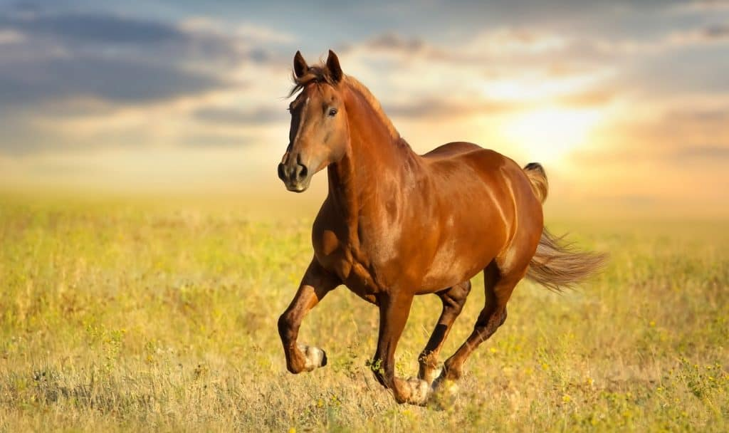 How long can a horse run? What's the fastest breed? The one with the most stamina? Find out the answers to these questions & more inside!