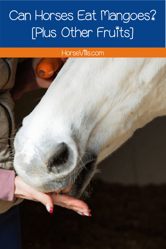 Can horses eat mango? Find out the answer, plus learn about other fruits that are- and are not- safe to feed your horse.