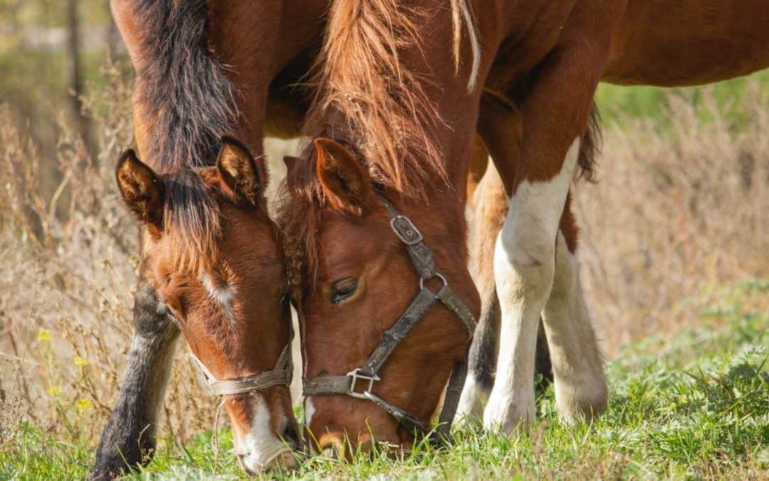 Can Horses Eat Almonds [Fruits, Leaves, Other Tree Parts]?