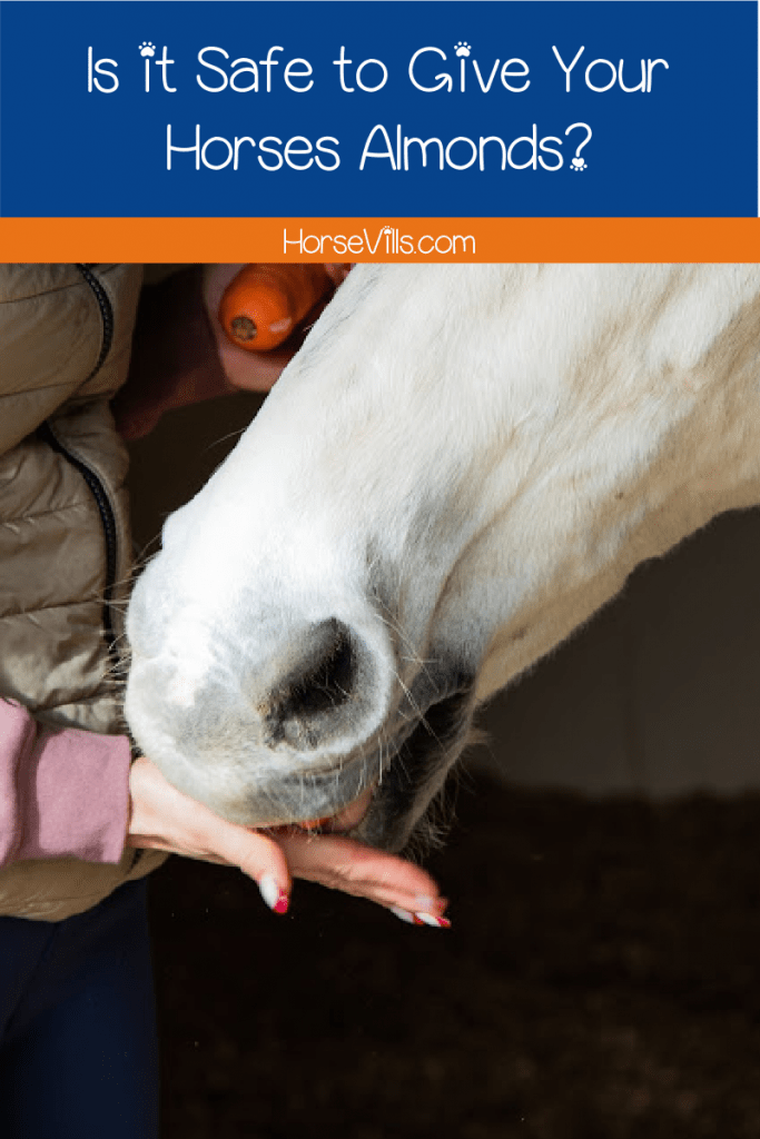 Can horses eat almonds? What about other types of nuts and tree fruits? We're answering those questions and more, so just keep reading!