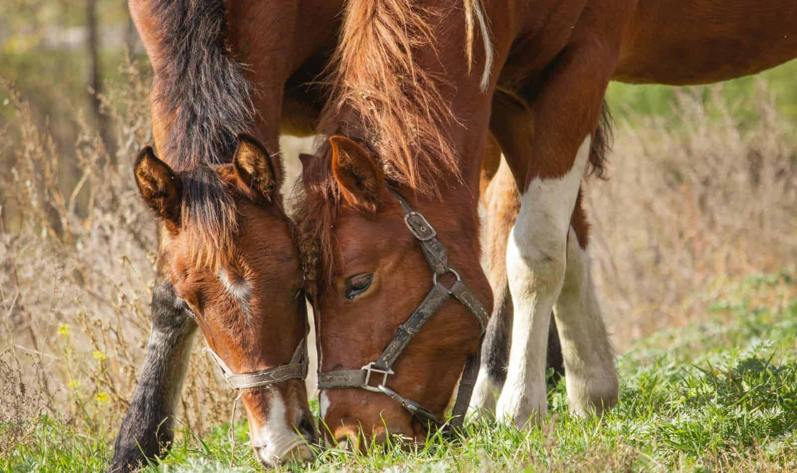 horses eating grass: can they also eat almonds?