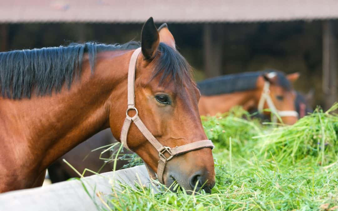 Can Horses Eat Cauliflower? + Other Foods to Feed Your Horse