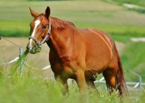 Can Horses Eat Turnips? Are They Toxic?