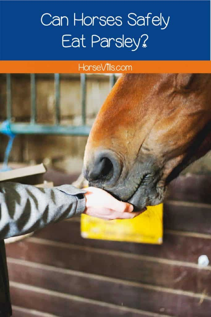 horse eating from a woman's hand