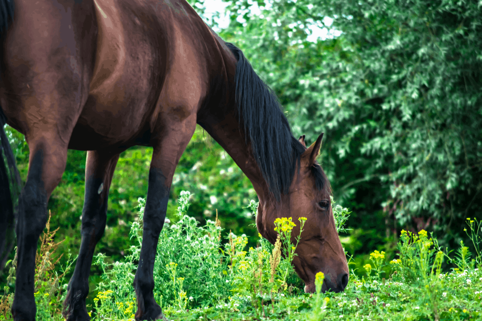 a hairy horse eating grasses beside yellow wild flowers: can horses eat pine needles instead?
