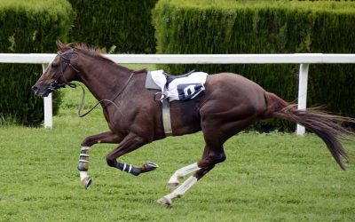 31 Incredible Famous Racehorse Names