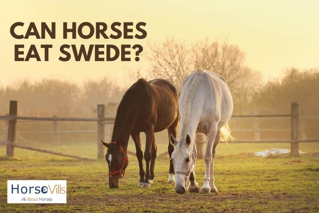 horses eating grasses. can horses eat swede instead?