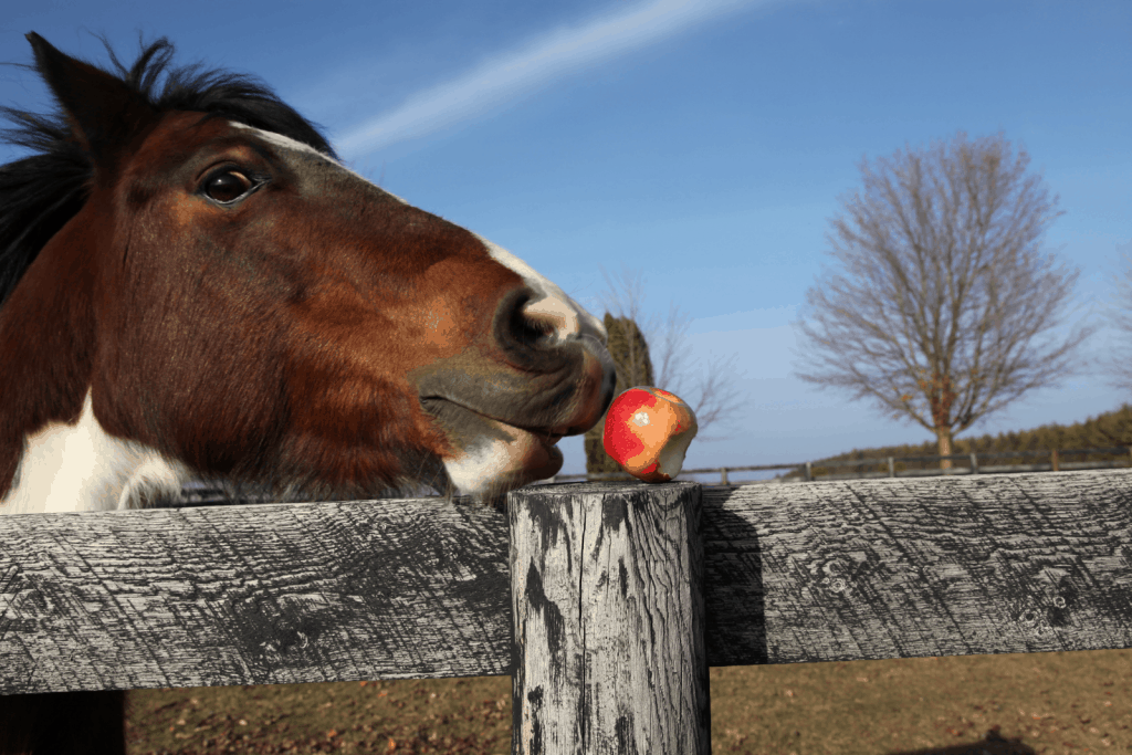 a dotted horse smelling an apple on the fence