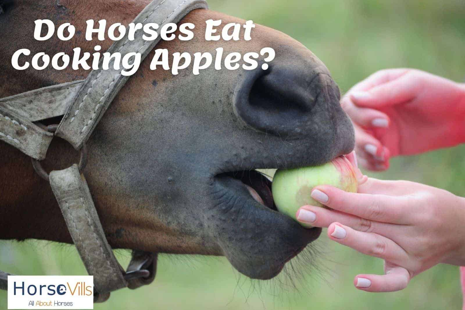 a hand feeding apple to a horse: do horses eat cooking apples?