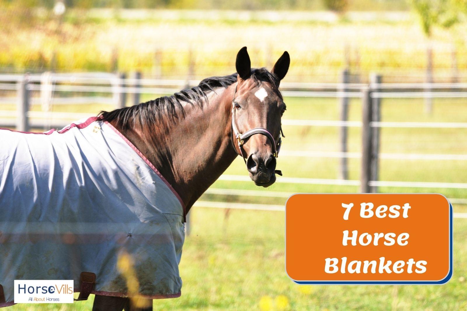 brown horse using a light blue blanket