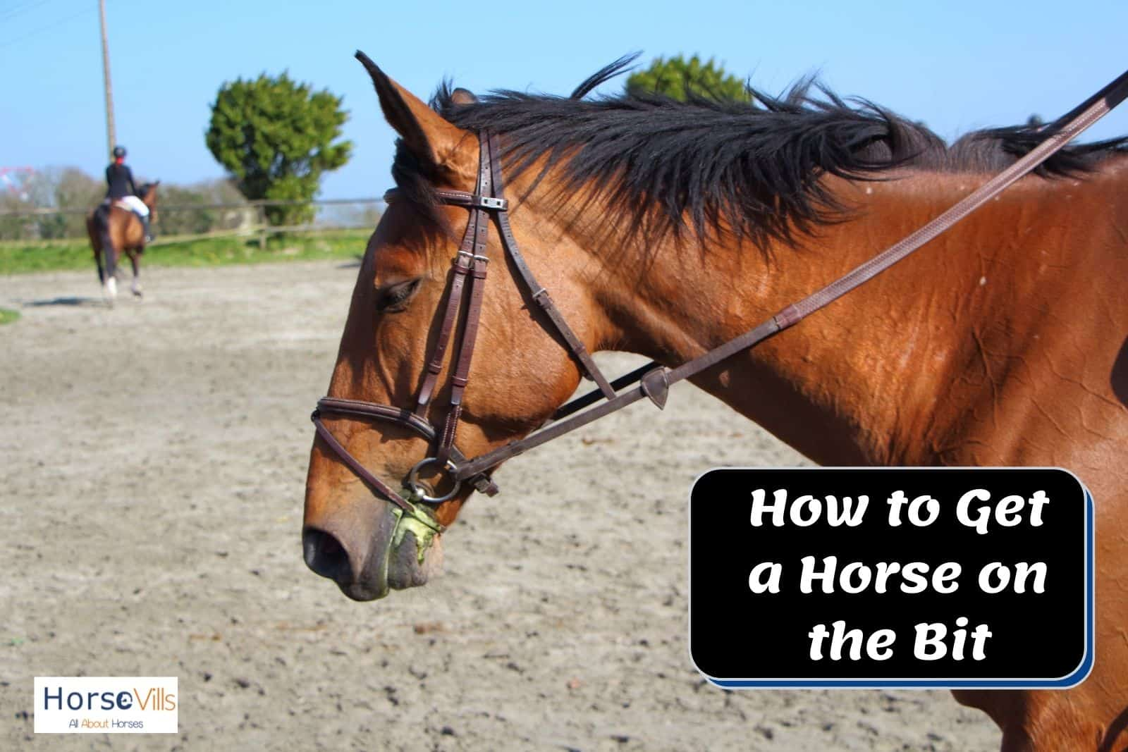 how to get a horse on the bit? this brown horse is wearing bit