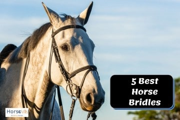5 Best Horse Bridles in 2021 [In-Depth Review]