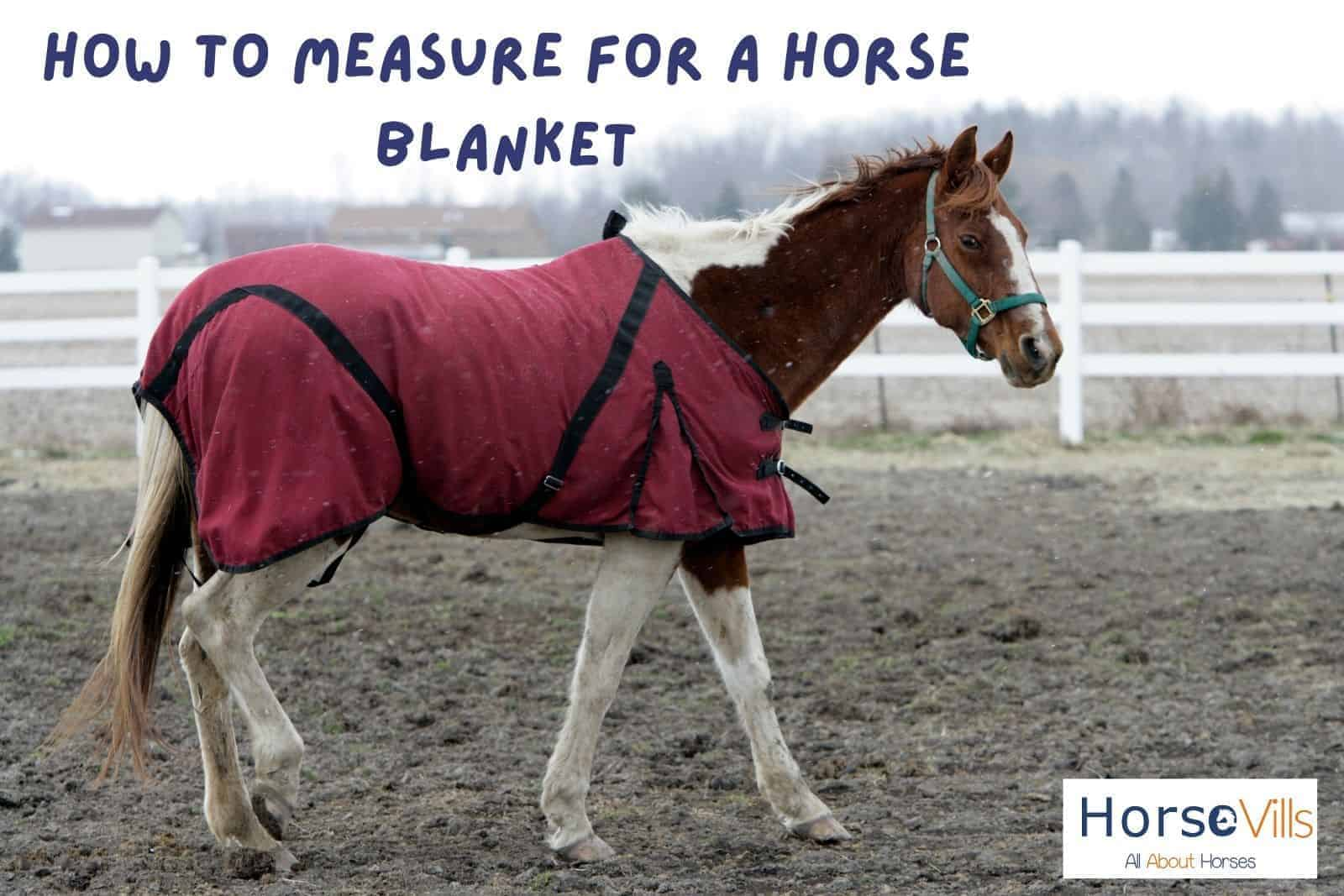 a horse wearing a red blanket