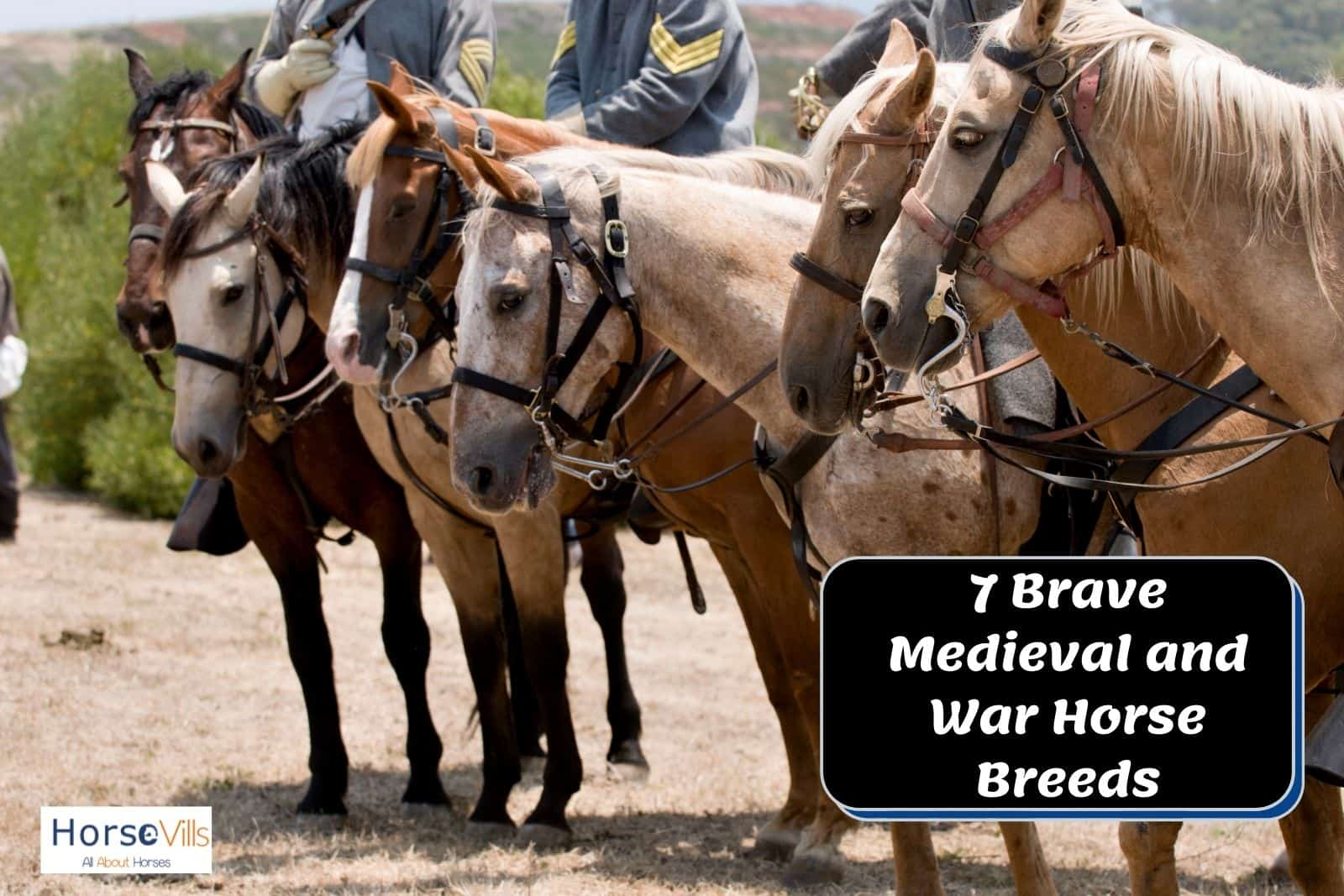 army of war horse breeds