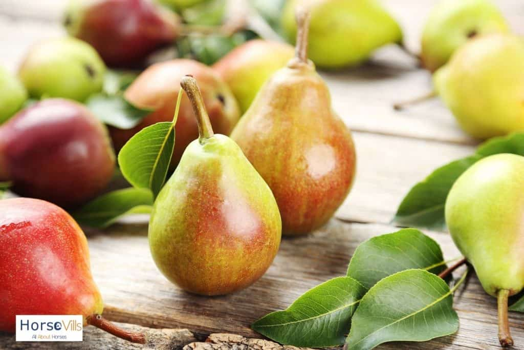 freshly picked pears: can horses eat pears?