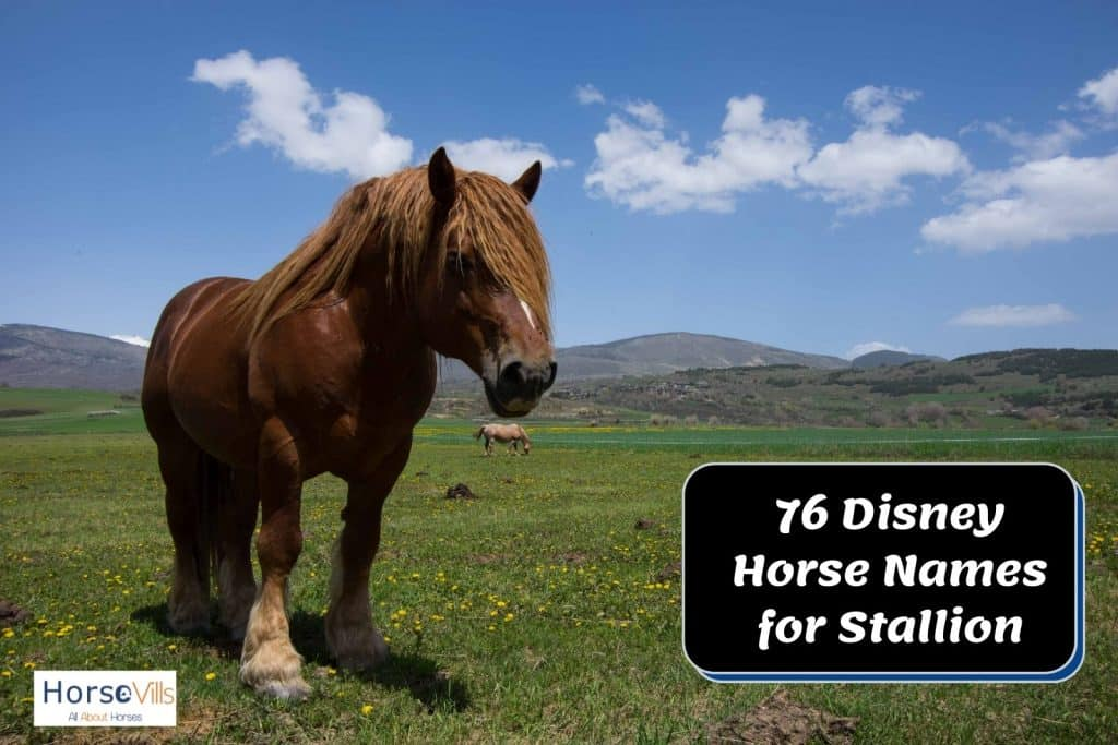 large brown draft horse standing in the hot summer