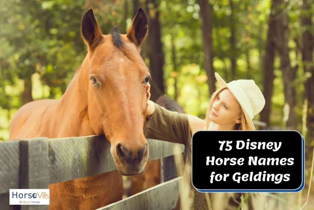 pretty lady in white hat touching a brown horse's face and thinking what Disney horse names will match him