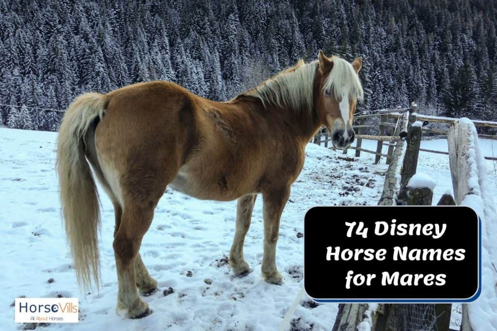 dark brown horse with white long hair suitable for Disney horse name