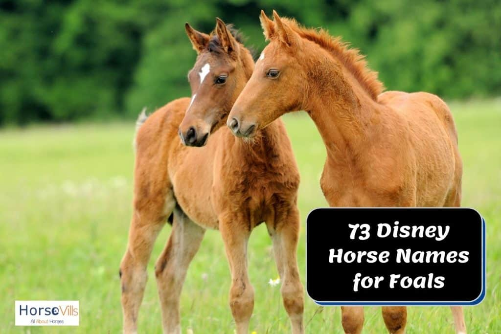 cute brown foals with Disney horse names