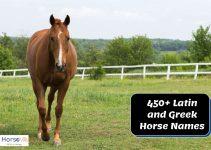 450+ Fascinating Latin and Greek horse names
