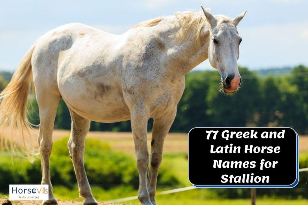 white stallion with pinkish nose