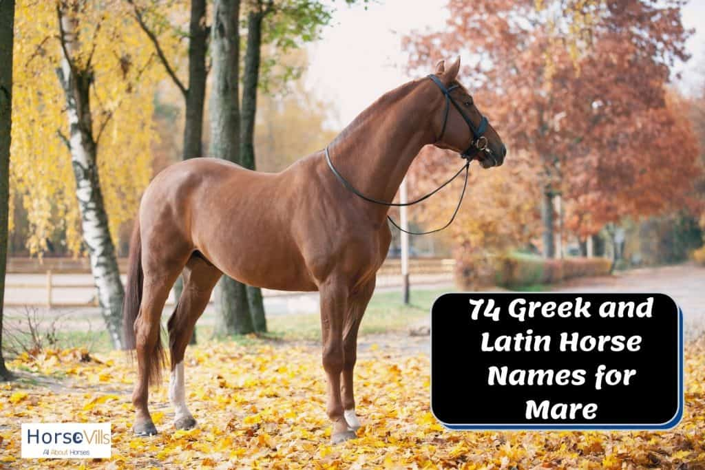 brown mare standing gracefully with her Greek horse names