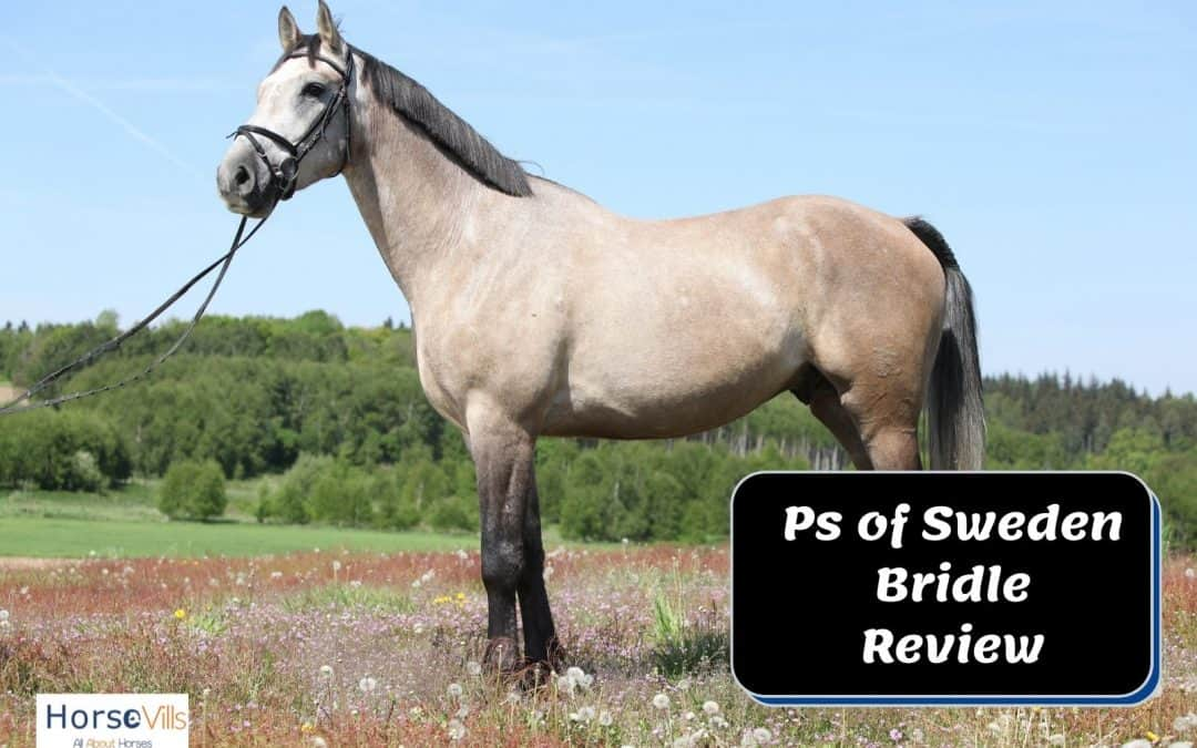 PS of Sweden Bridle Review (Updated for 2021)