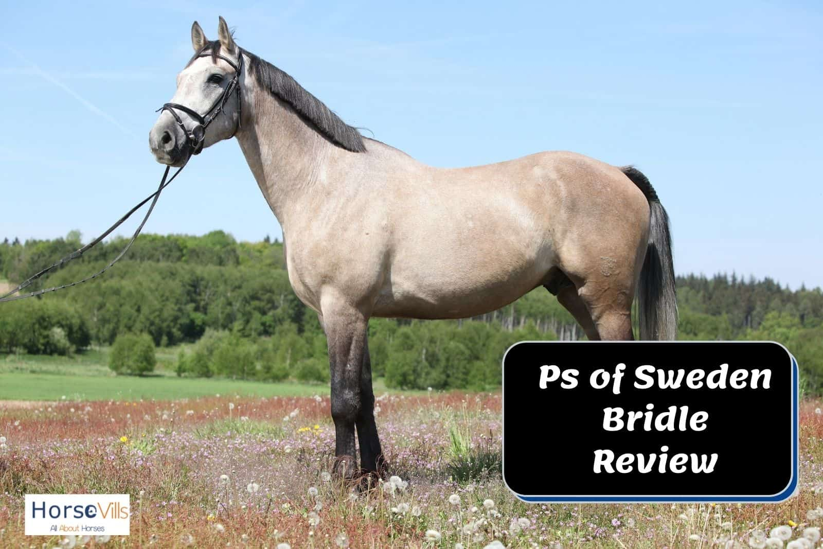 greyish horse standing gracefully for a PS of Sweden bridle review