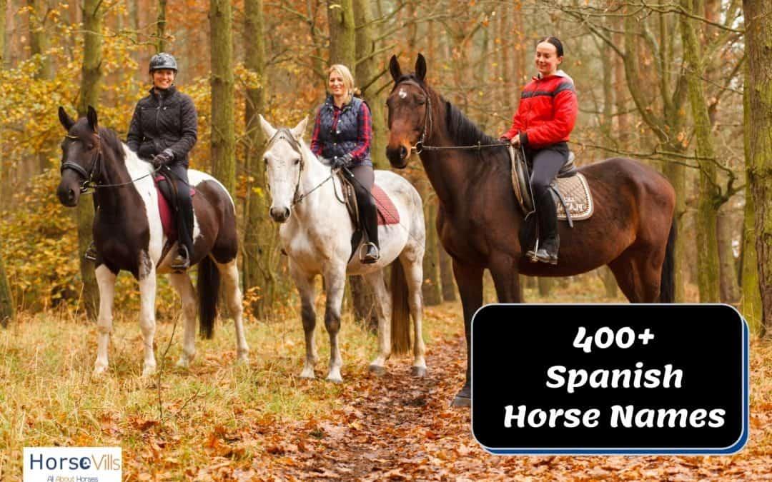 400+ Dazzling Spanish Horse Names