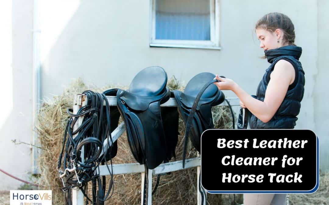 Best Leather Cleaners for Horse Tack (Expert Rider Review)