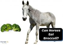 Can Horses Eat Broccoli? (Is It Good or Bad?)