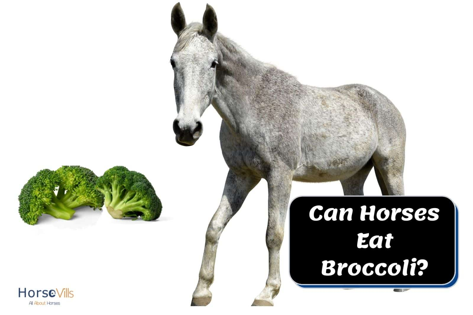 grey horse and two broccolis. can horses eat broccoli?