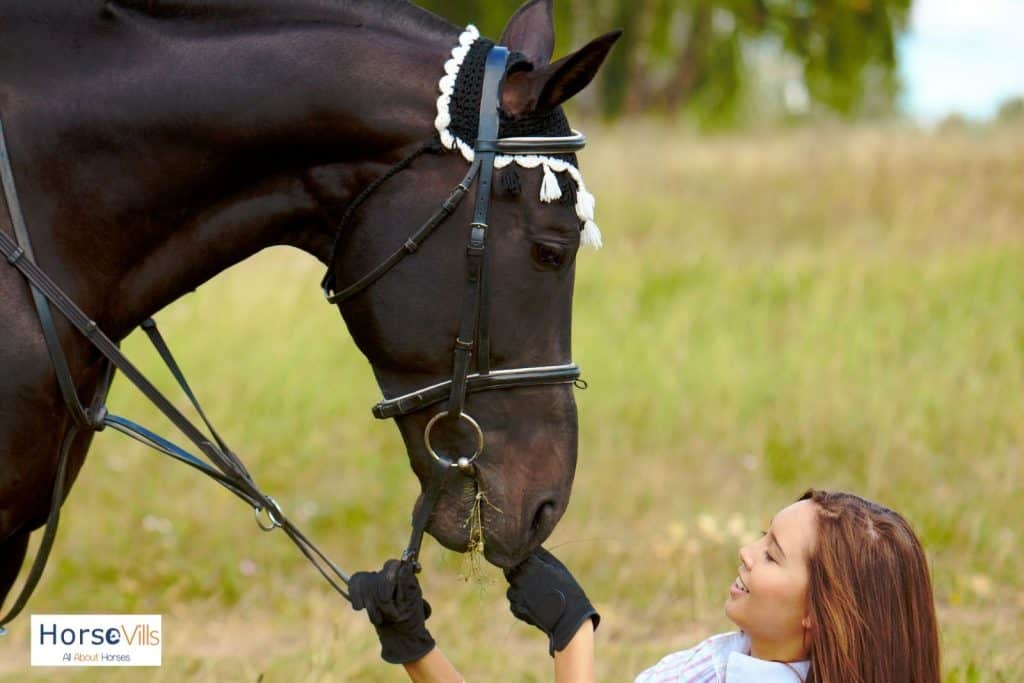 lady giving treat to the brown mare