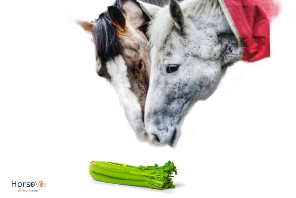 two horses about to eat a celery: can horses eat celery? are they safe?