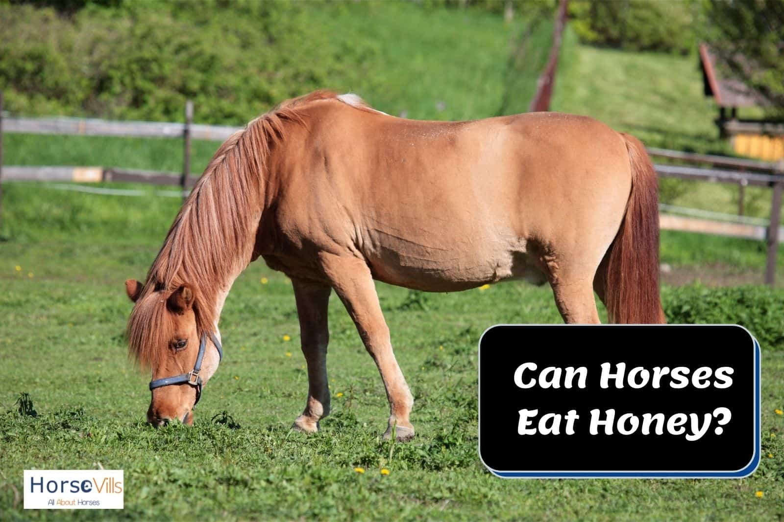 brown horse eating grasses. can horses eat honey too?