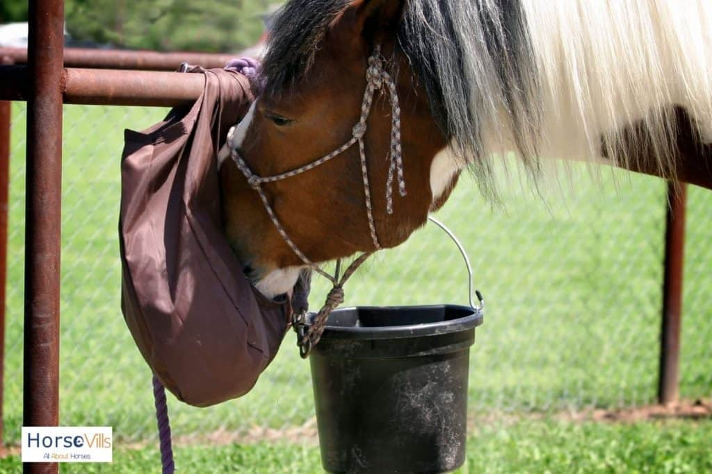horse eating in a brown plastic bag