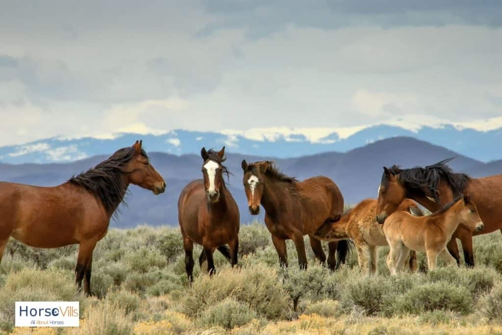 family of wild horses in the mountains