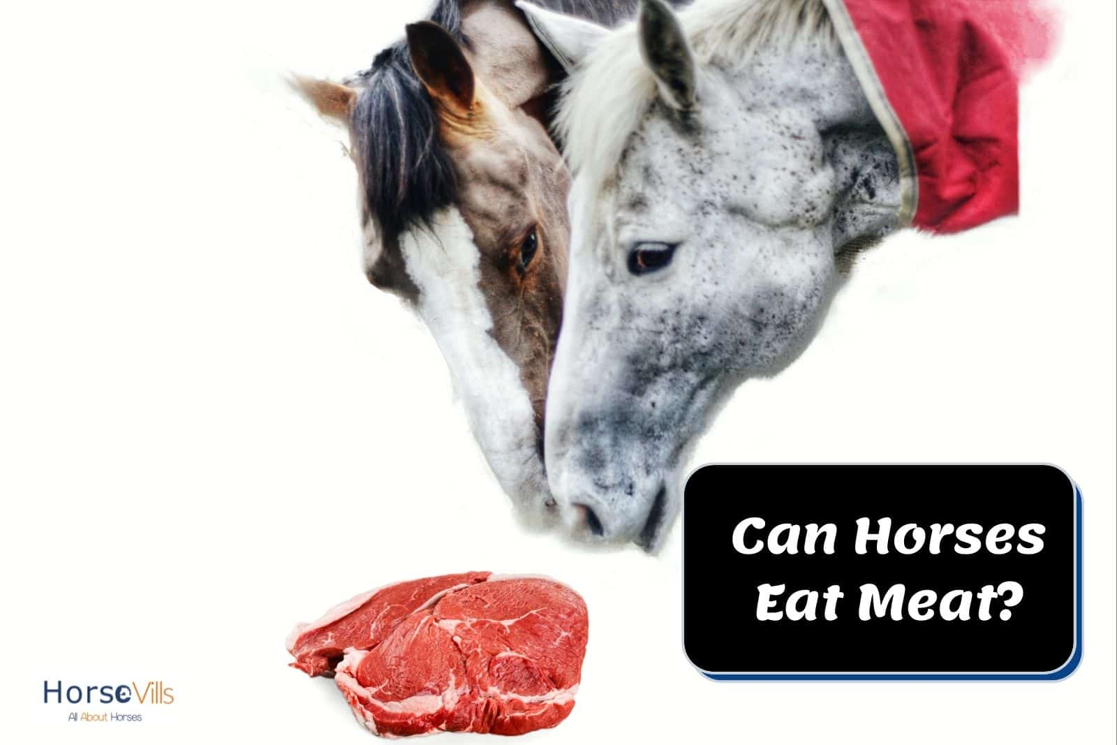 two horses are going to eat the pieces of pork but can horses eat meat?