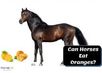 Feeding Oranges to Horses: What Are the Benefits?