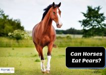 Can Horses Eat Pears? (Helpful Guide and Tips)