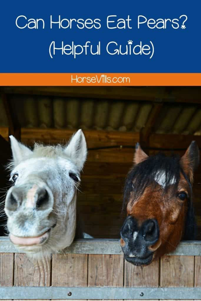 two horse happily waiting for their food