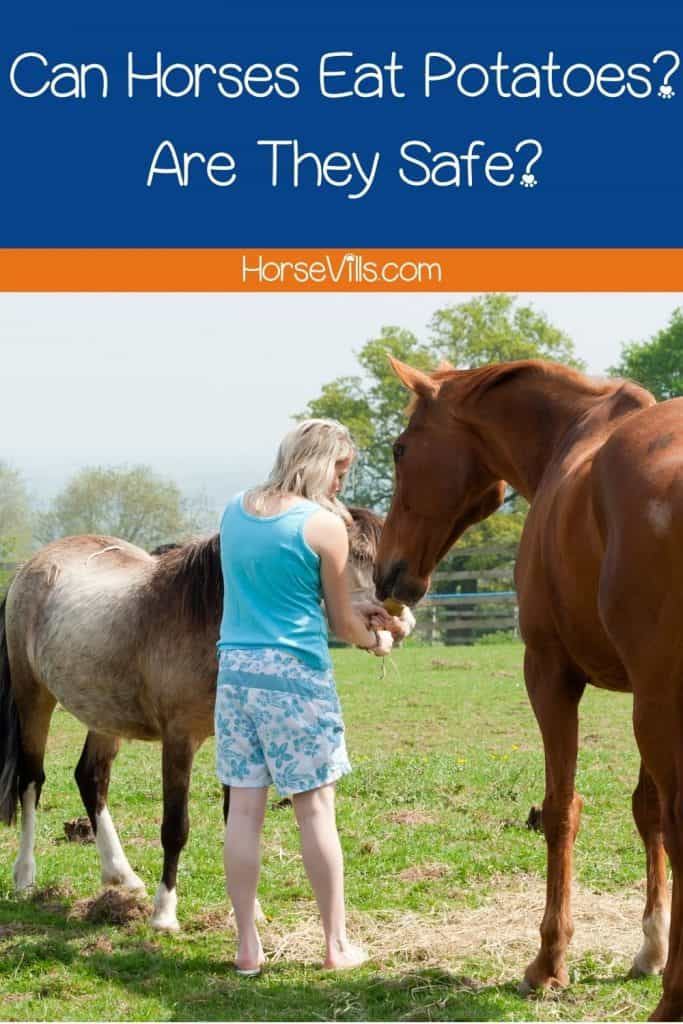 a woman giving potatoes to horses but can horses eat potatoes? are they safe?