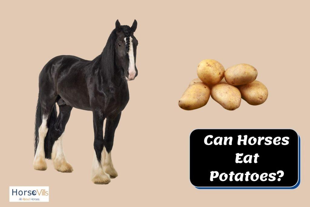 black horse looking at the potatoes. can horses eat potatoes?