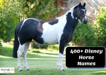400+ Magical Disney Horse Names for Males & Females