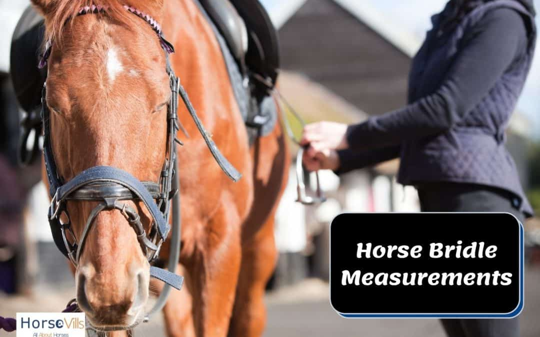 Horse Bridle Measurements Chart And How to Use it