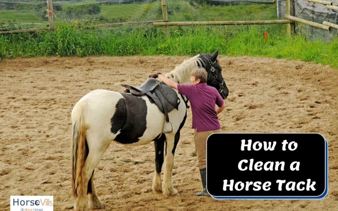 How to Clean Horse Tack Properly to Ensure it Lasts