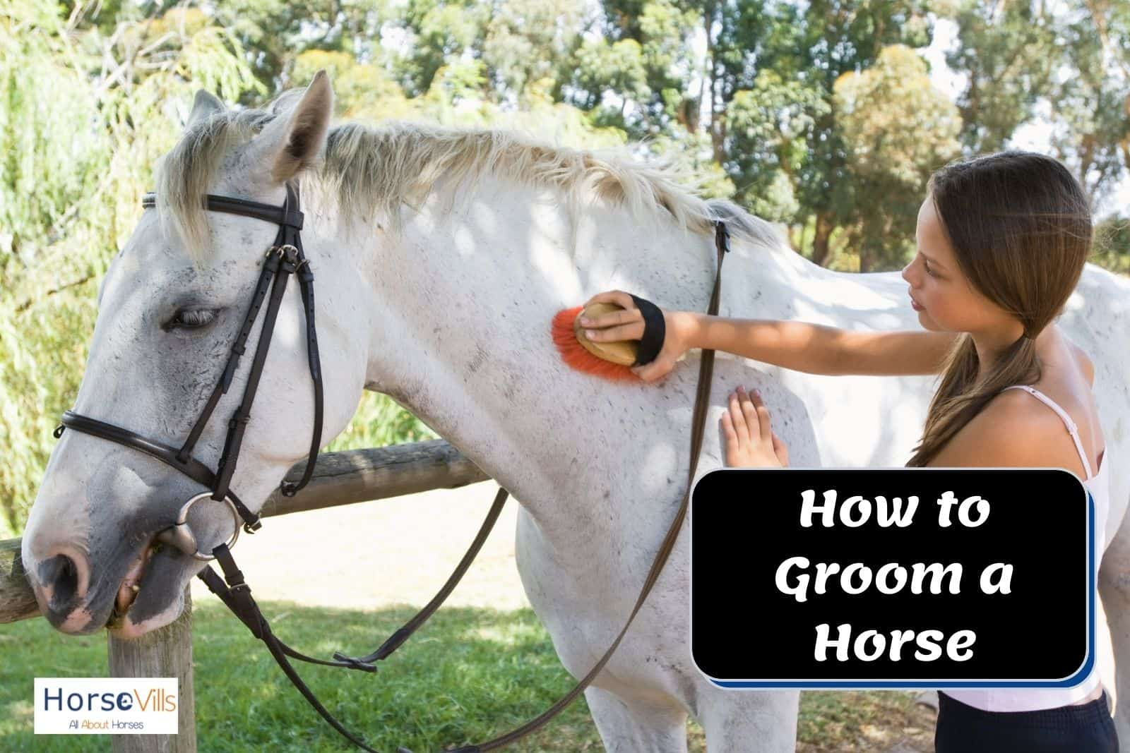 a lady showing how to groom a horse