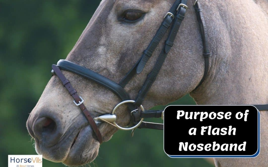 What is the Purpose of a Flash Noseband for Horses?