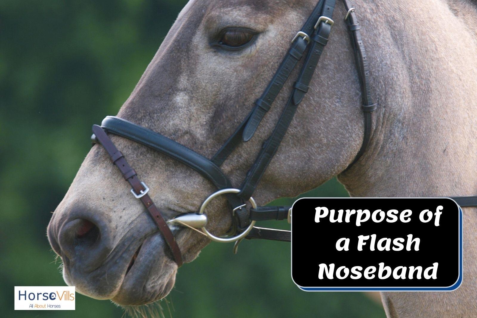 grey horse with black noseband